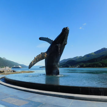 Whale Sculpture Project in Infinity Pool - HDG Building Materials