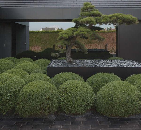Centaur Grey 60x60 cm Porcelain Paver Courtyard Application - HDG Building Materials